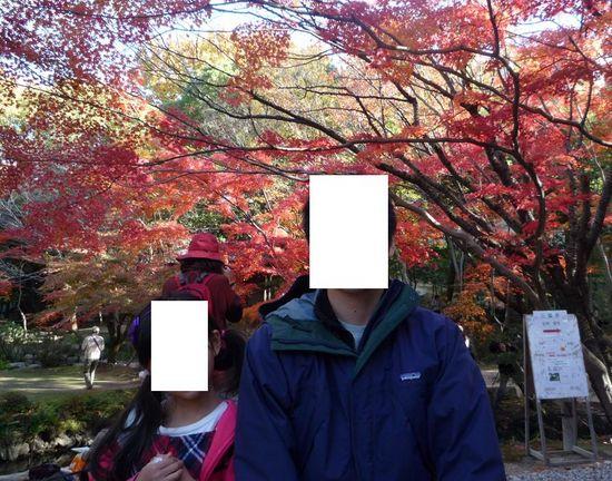 foliage b.jpg