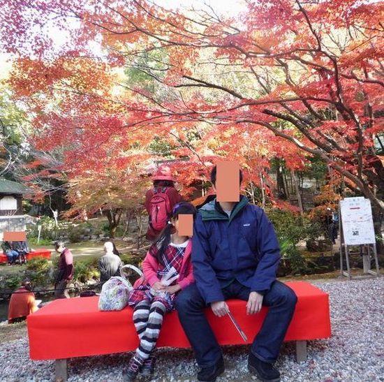 foliage b1.jpg